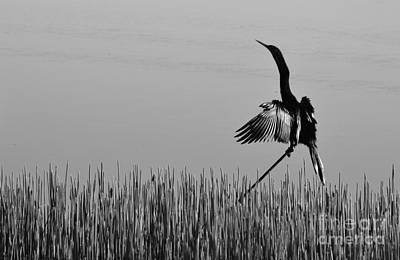 Double-crested Cormorant Photograph - The Good Life Monochrome by Melanie Moraga