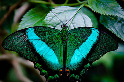 Photograph - The Gorgeous Butterfly by David Patterson