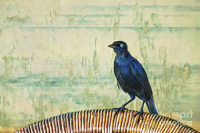 Iridescent Digital Art - The Grackle by John Edwards