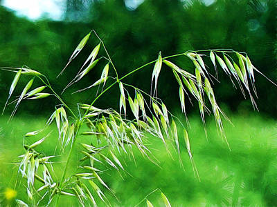Art Print featuring the photograph The Grass Seeds by Steve Taylor