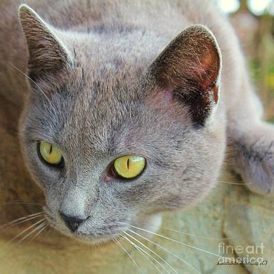 The Gray Cat Art Print by Laurinda Bowling