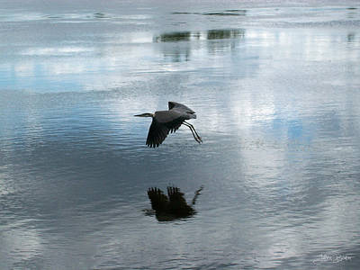 Water Photograph - The Great Blue Heron by Julien Boutin