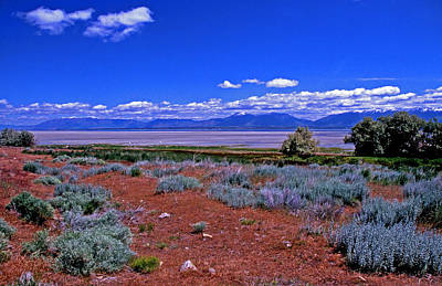 Food And Flowers Still Life Rights Managed Images - The Great Salt Lake From Antelope Island Royalty-Free Image by Rich Walter