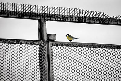 Photograph - The Great Tit by Ari Salmela