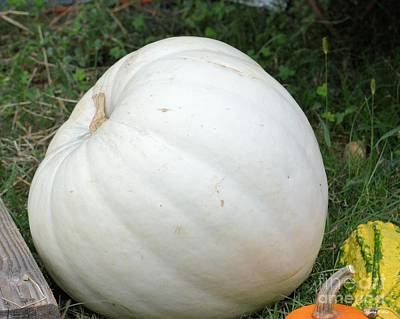 Photograph - The Great White Pumpkin by Maria Urso