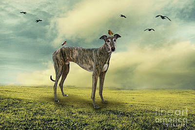 Photograph - The Greyhound by Ethiriel  Photography