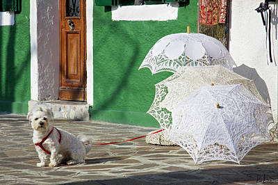 Photograph - The Guardian Of The Umbrellas. by Raffaella Lunelli