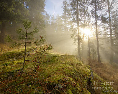 Sun And Tree Photograph - The Guardians by Idaho Scenic Images Linda Lantzy