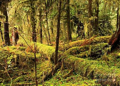 Photograph - The Hall Of Mosses by Adam Jewell