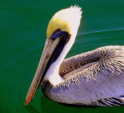 Nautical Birds Photograph - The Happy Pelican by Karen Wiles
