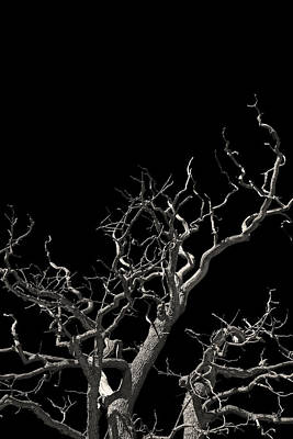 The Haunted Tree Original by Lloyd Scott
