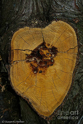 Photograph - The Heart Of A Tree by Susan Herber