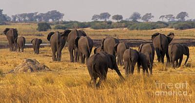 Art Print featuring the photograph The Herd - Chobe Np Botswana by Craig Lovell