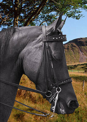 Vertical Photograph - The Horse - God's Gift To Man by Christine Till