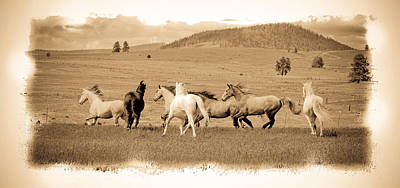 Photograph - The Horse Herd by Steve McKinzie