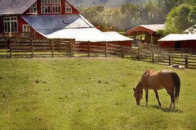 The Horse In The Barn Yard Art Print by Kathy Jennings