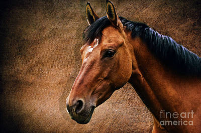 Graceful Mixed Media - The Horse Portrait by Angela Doelling AD DESIGN Photo and PhotoArt