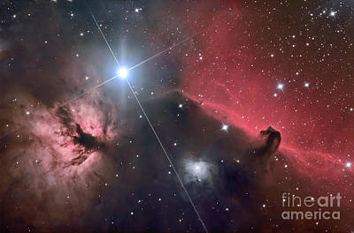 Winter Animals - The Horsehead Nebula by Roth Ritter