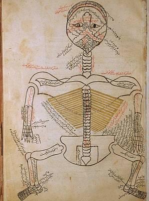 The Human Skeleton, From Mansurs Art Print by Everett