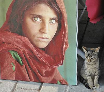 Photograph - The Icon And The Kitten by Ian  MacDonald