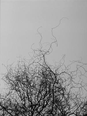 Photograph - The Idea Tree by Luis Esteves