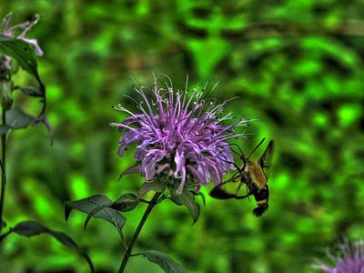 Horsemint Photograph - The Imposter by William Fields