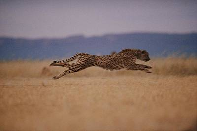 The Incredible Speed Of An African Art Print by Chris Johns