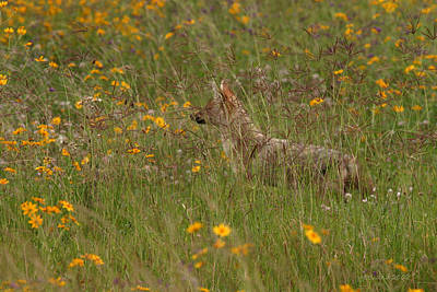 Photograph - The Jackal by Joseph G Holland