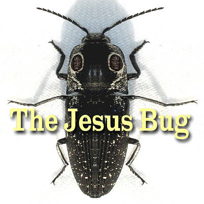 Jesus Freaks Photograph - The Jesus Bug by Terry Lynch