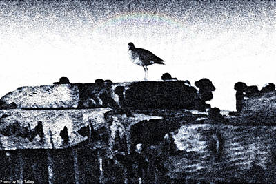 The Jetty Bird Art Print by Ronald Talley