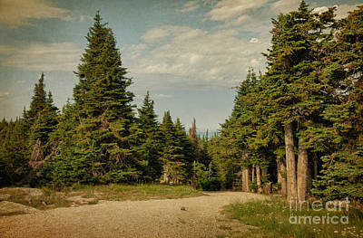 The Journery Art Print by Beve Brown-Clark Photography