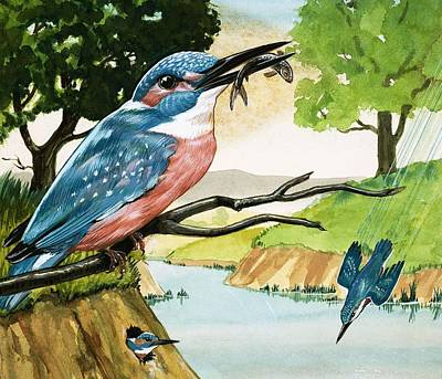 Kingfisher Painting - The Kingfisher by D A Forrest