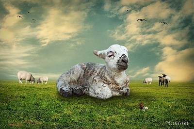 The Lamb Art Print by Ethiriel  Photography