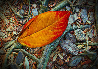 The Last Leaf Art Print by Barbara Middleton