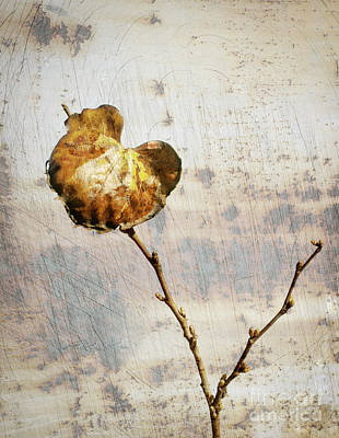 Photograph - The Last Leaf by David Waldrop