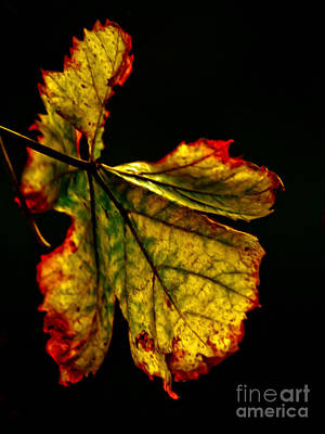 Photograph - The Last Leaf by Michael Canning