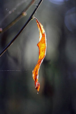 Leaf Photograph - The Last One by Marie Jamieson