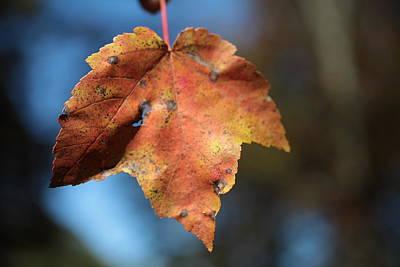 The Leaf Art Print