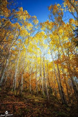 Mt Rushmore Royalty Free Images - The Light Up Through the Aspens  Royalty-Free Image by Mitch Johanson