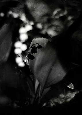 Photograph - The Lily Of The Valley Doesn't Know by Rebecca Sherman
