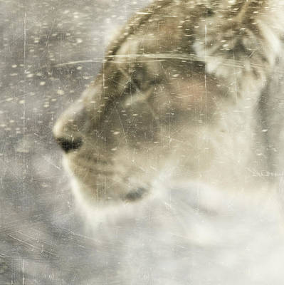 The Lion Art Print by Tove Jessica Frank
