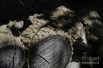 Photograph - The Logs by Gary Onuschak