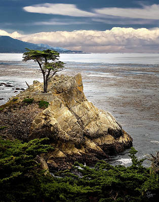 Photograph - The Lone Cypress At Monterey Bay by Endre Balogh