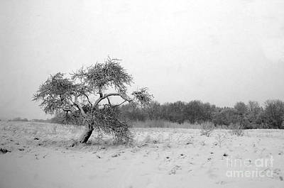 Photograph - The Lonely Apple Tree by Ausra Huntington nee Paulauskaite