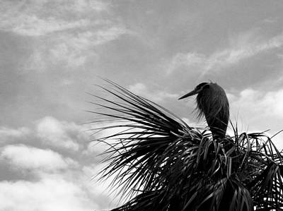 Photograph - The Lonely Great Blue Heron by Judy Wanamaker