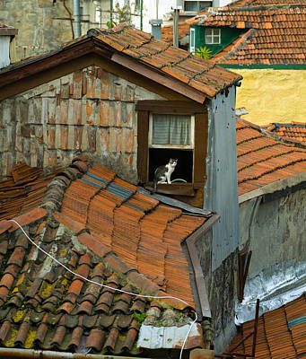 The Lord Of The Roofs Original by Dias Dos Reis