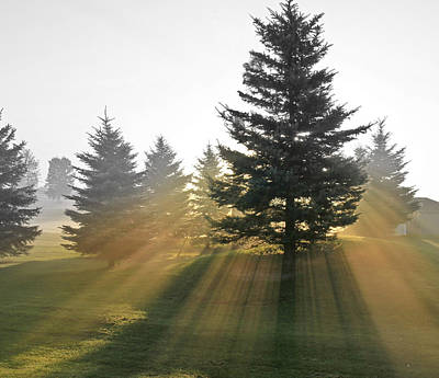 Art Print featuring the photograph The Magic Of The Morning Light by Nick Mares