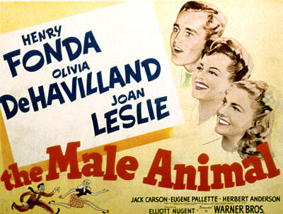 Posth Photograph - The Male Animal, Henry Fonda, Olivia De by Everett