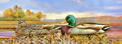Photograph - The Mallard And The Drake by Steven Llorca