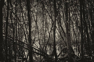 The Mangrove Art Print by Armando Perez